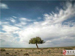 来自大漠胡杨的召唤――金龙旅行社大漠胡杨七日游随拍