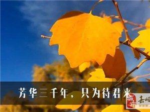 2017额济纳――芳华三千年