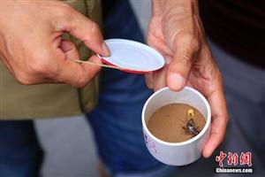 杭州蛐蛐上市,一只蛐蛐的价钱按品相能卖几元至几百上千元人民币不等