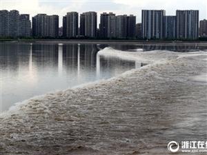 杭州又到看潮季