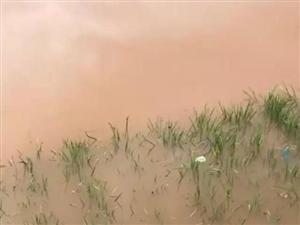 """台风过境,和建水""""浇警""""一起变身""""战斗鸽""""!"""