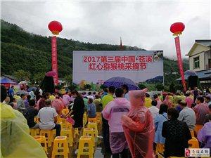 2017第三届苍溪红心猕猴桃开园仪式(图)