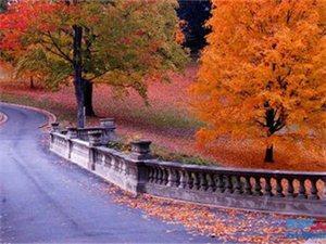 我站在秋的路口……