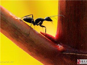 蚂蚁-微距