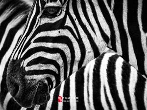 干货技术贴!6个基础技巧帮你拍好黑白照片