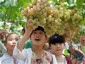 立秋后吃葡萄,功效堪比冬�x夏草,可惜很多人不知道~