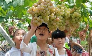 立秋后吃葡萄,功效堪比冬虫夏草,可惜很多人不知道~