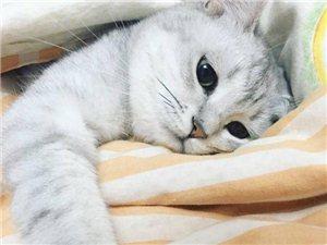 你以为你在养猫?其实你家猫是个人……