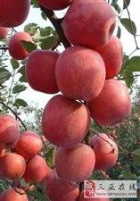 预订不使用化肥农药种植的无公害蔬菜