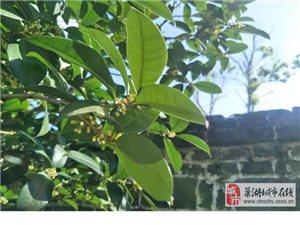 三瓜公社的空气甜甜的....
