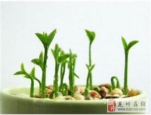 这一种水果吃完籽不要扔掉哦,放盆里浸泡下,七天发芽一个月爆盆