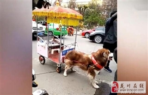 狗狗用霸气座驾接小主放学,连宝马都弱爆了!