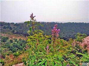 秋花秋草春色浓,花着花谢花弄影。草长草飞草黄处,年来年客岁无声。
