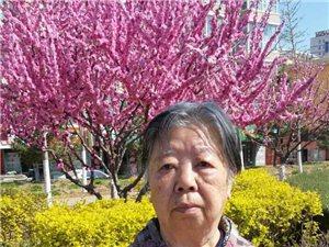 《难以忘却的影象》抗美援朝文艺兵的故事