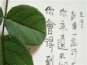 【落叶对秋天的情怀】手写的温度,书写的魅力(图片)
