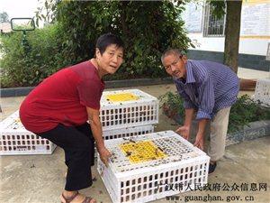广汉市新闻传媒中心――广汉市残联:扶危助困暖人心,脱贫致富送一程