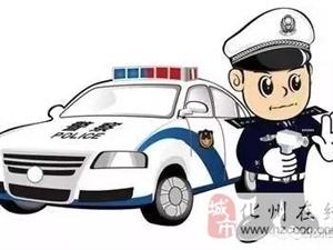 """大动作!化州交警查处交通违法200多起,擒下5""""醉猫""""..."""