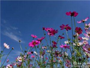【武功古城】九月,武功古城邀您来赏花