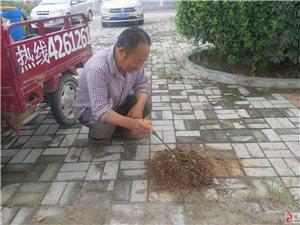 防治白蚁专家张祯群在仙女卫生院院内发现特大白蚁窝
