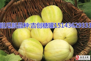 镇赉县建平乡甜瓜产业协会