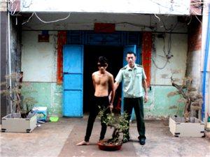 海南洋浦:男子半夜翻墙偷盗3盆香楠被刑拘