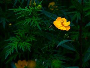 花博园中的小花