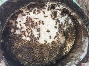 出售电脑下注平台土蜂蜜