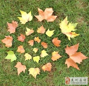 17个落叶创意,国庆节每天玩法不重样