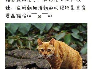 中华田园猫都有哪些品种?长知识了! ????