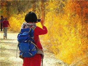 金秋十月的金塔胡杨林