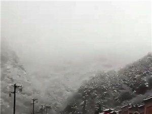 我家�J猴桃�a地下雪了,秦�X太白山下雪了