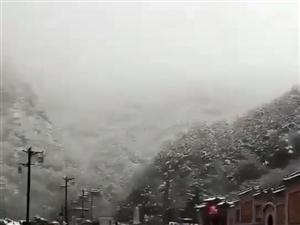 陕西眉县猕猴桃,太白山下雪了,果园也变样了,在果农这来鲜果子吧