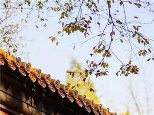 到了金秋时节,南京秋风一阵,满目金黄