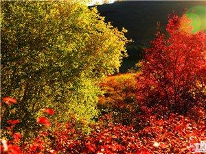 《枫树、桦林》二小人