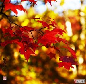 《枫树、桦林》二君子