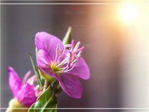 【海�{影像】微距――堤埂上看到的小花花(�D片)
