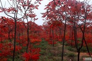 牛河梁赏红叶
