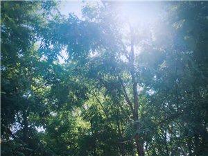 初秋的景色 ���  由著名草根�z影��天琪拍�z