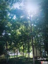 初秋的景色 凉凉  由著名草根摄影师天琪拍摄