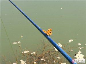 与一只蝴蝶的邂逅