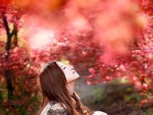 红叶节来临,教你一些红叶拍摄技巧!