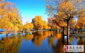 我在金塔胡杨林,你在哪哒咧?
