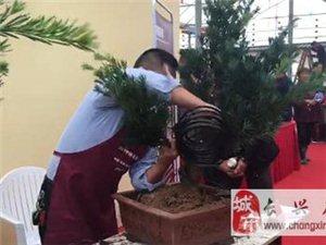 2017中国(长兴)花木大会首届盆景造型大赛正式开赛
