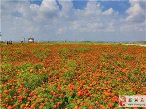 陕西省出台现代农业产业园创建工作指导意见