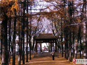 讷河的秋色
