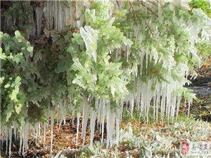 迎宾湖的冰凌晶莹剔透
