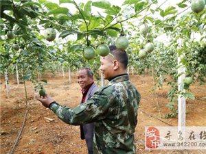 """寻乌县有没""""公司+合作社+农户""""的产业化经营模式,求志同道合的农创人!"""