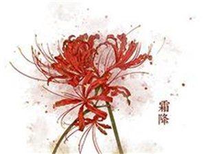 【宋词】南乡子-心宽赏菊时