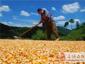 农民未来的出路在哪里?全国农民将面临5种结局,第4类农民最苦!