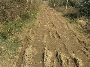 吉河这条泥泞路,如今成了这样子!你有话要说吗?